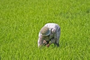 Mezőgazdasági és turisztikai alkalmi munka egyszerűsített foglalkoztatás keretében.